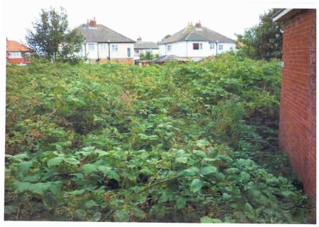 The overgrown site before development