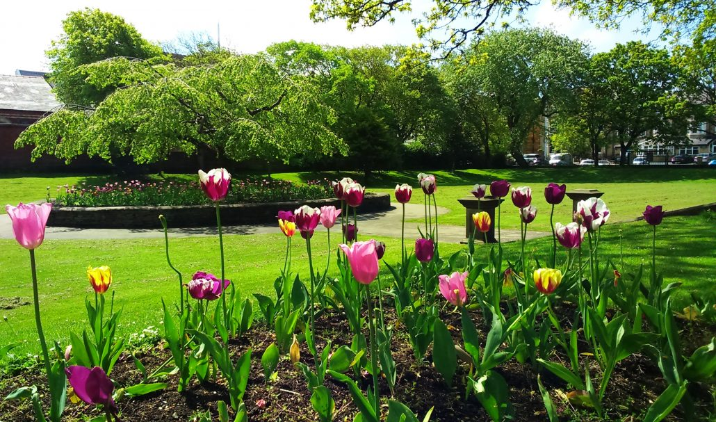 Tulips in Ashton Gardens