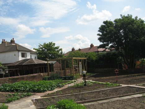 Blundell Road Allotments 8